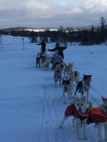 2016 sled dog tour